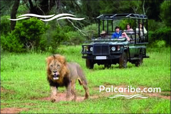 Escape Sudafrica con Reserva Privada