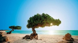 Aruba - Temporada baja 2019